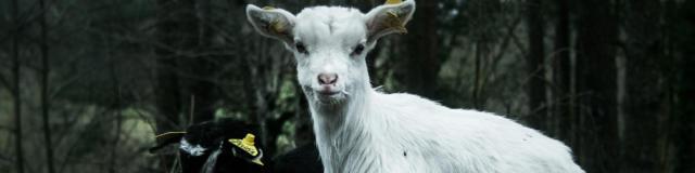 Chèvre - Ferme de Caro